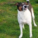 Redevelopment Authority Considers Pet Fee